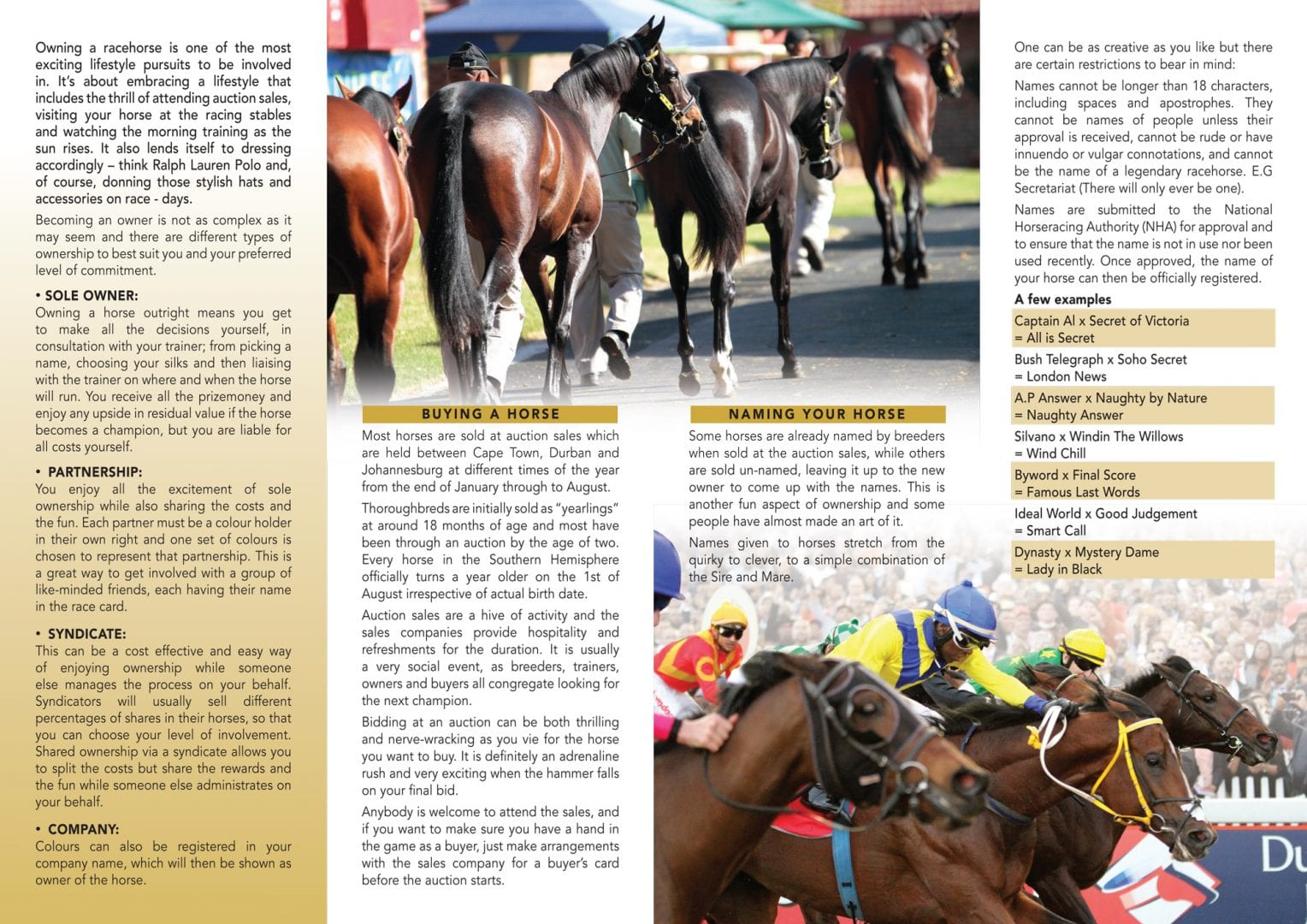 Owning a Thoroughbred Racehorse in South Africa